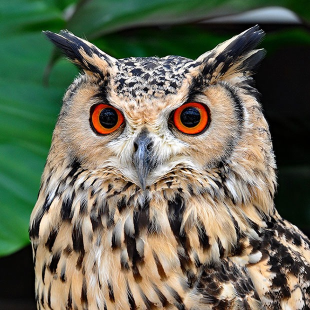 Closeup shot of an owl