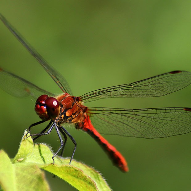 Closeup shot of a dragonfly